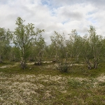 Дремучие леса Титовки
