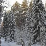Зима. Дорога. Лес