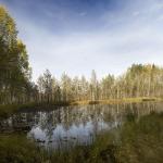 Безымянное болотце