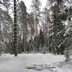 Заволжские леса
