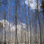 Зима на Кленовой горе