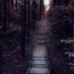 Cумерки в лесу