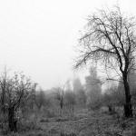 Загадочный туман
