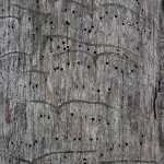 Рисунок на дереве